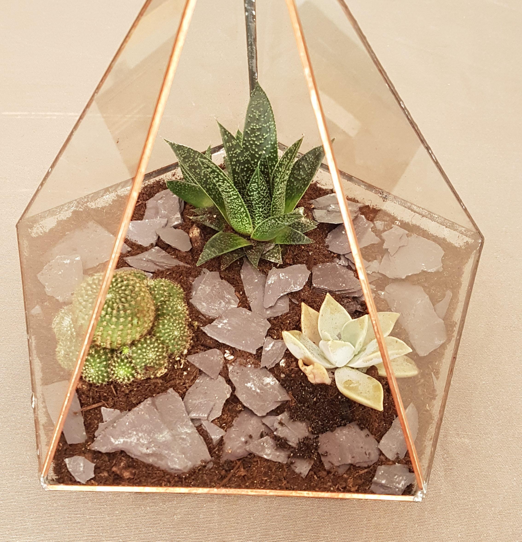 terrarium succulente