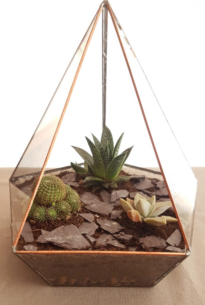 faire un terrarium avec des plantes succulentes crayons. Black Bedroom Furniture Sets. Home Design Ideas