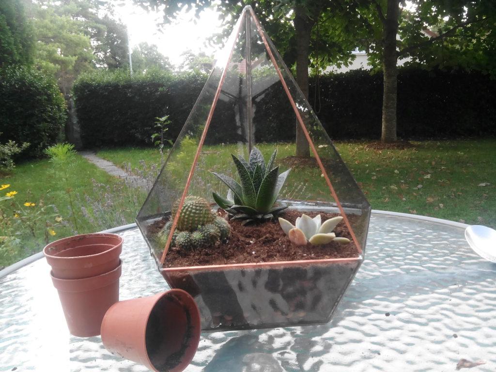 faire terrarium plante succulente