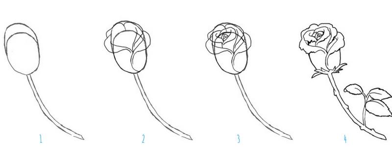 Comment Dessiner Une Rose Crayons Pinceaux