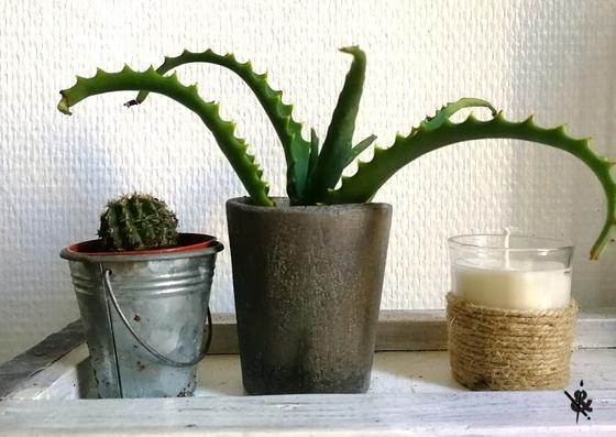 fabriquer pot de fleur en béton