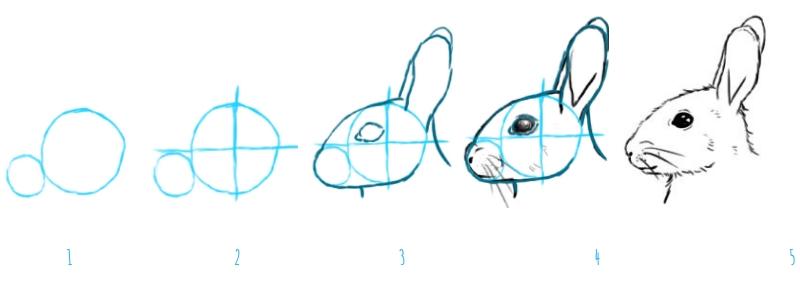 Comment Dessiner Un Lapin Crayons Pinceaux