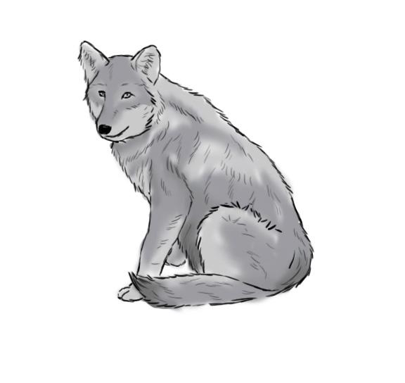 apprendre à dessiner un loup