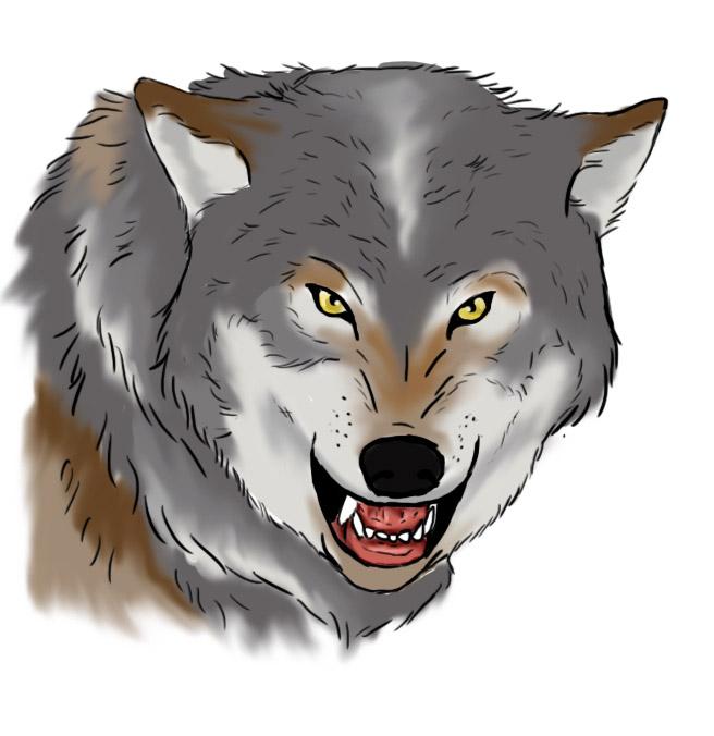dessin loup qui grogne