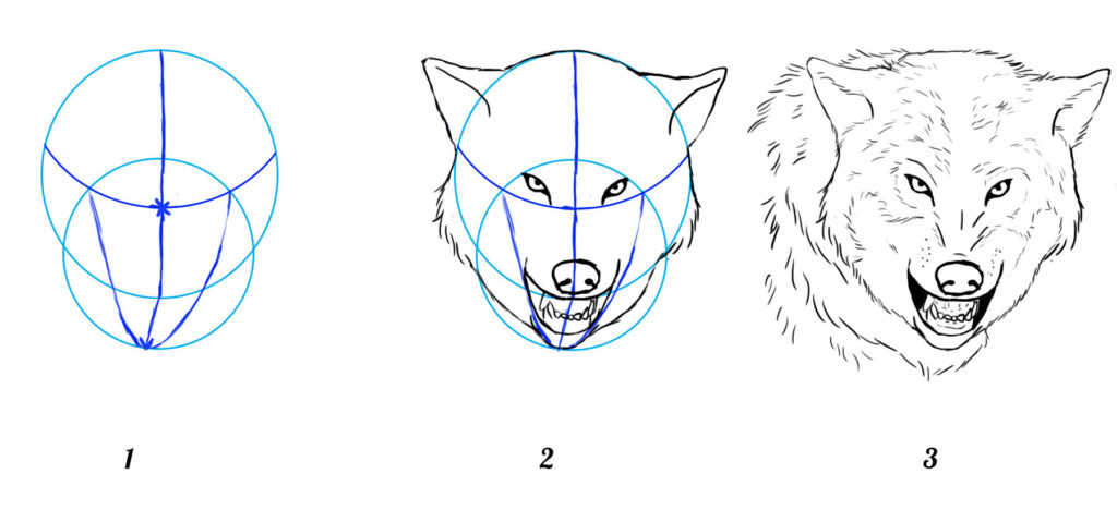 tuto dessin loup