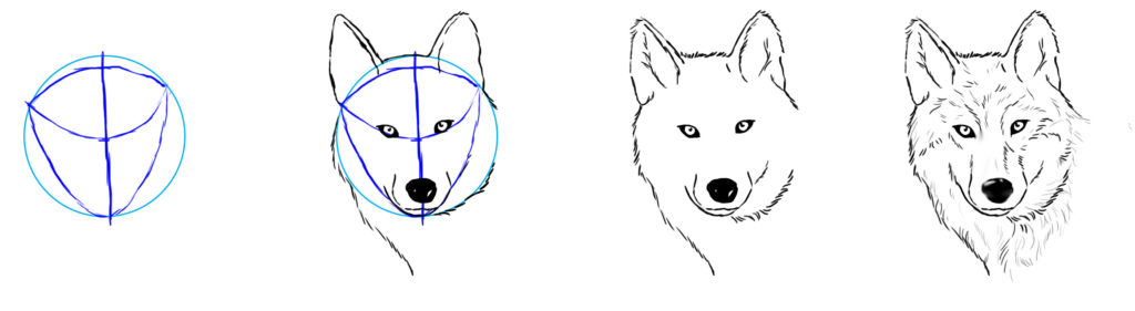 dessiner une tete de loup