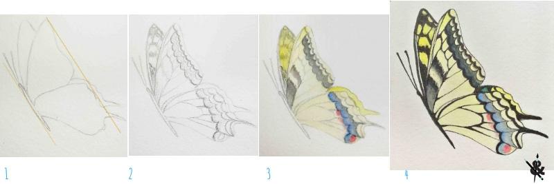 apprendre à dessiner un papillon