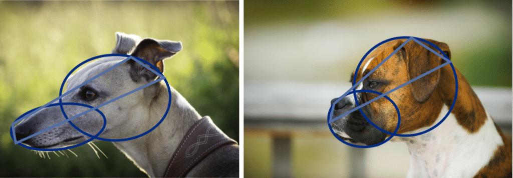 modele dessin chien de profil