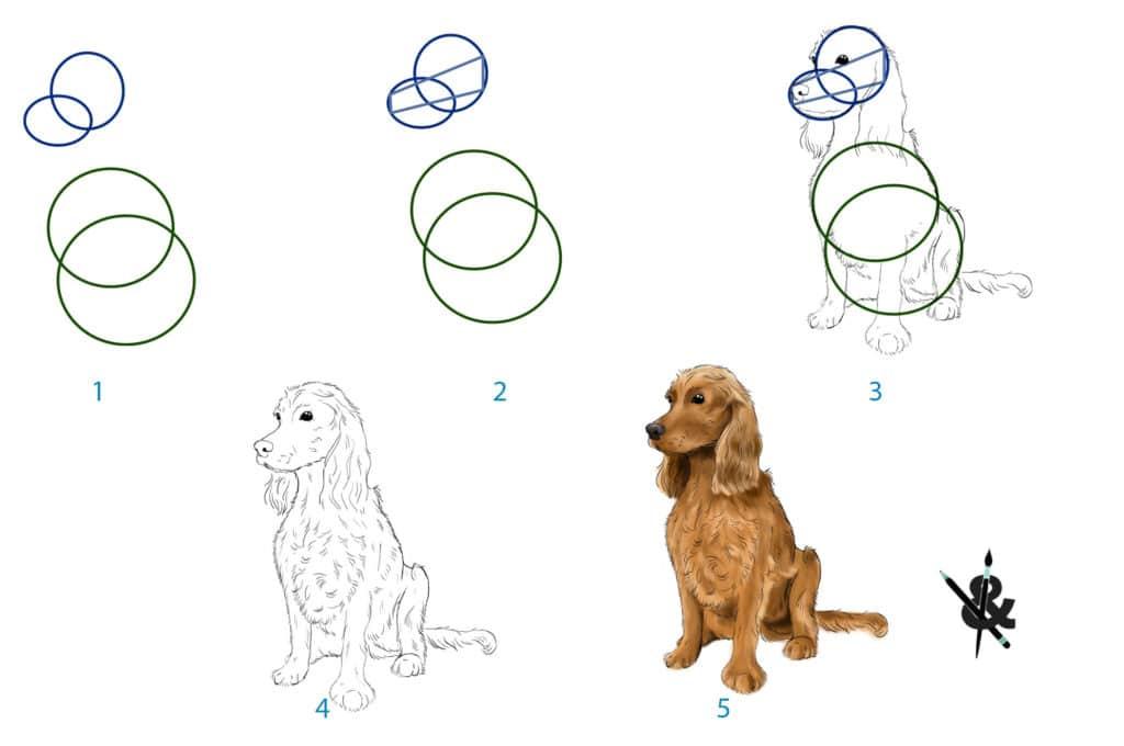 dessiner un chien assis