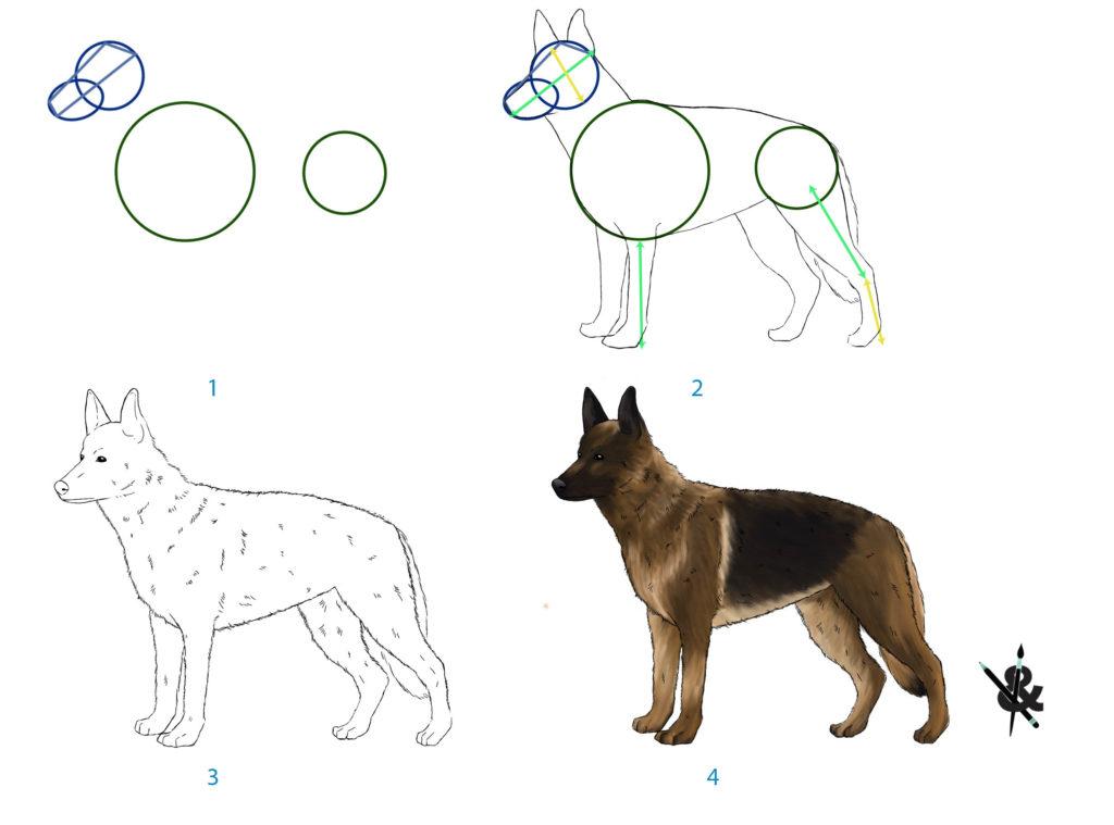 tutoriel dessiner un chien