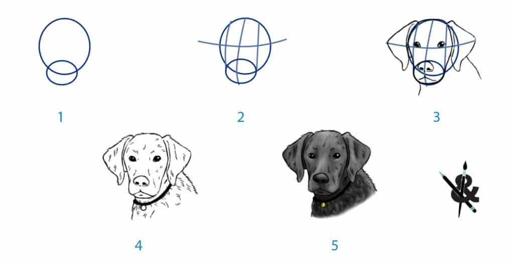 dessiner une tete de chien