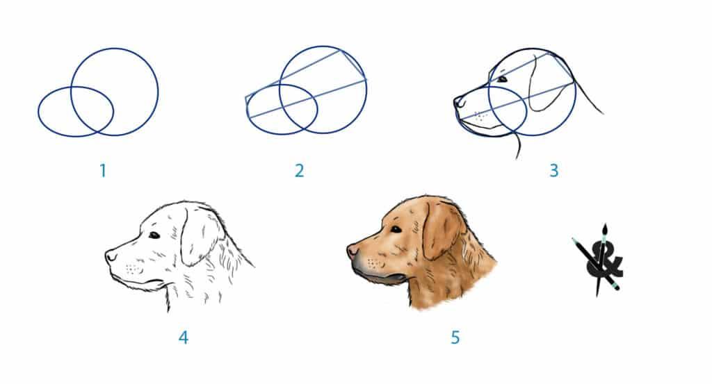 dessiner un chien de profil tuto